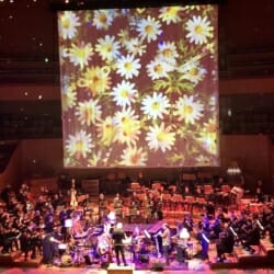 Julia Wolfe's Flower Power with BBC Concert Orchestra London